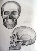 skull drawings by JoeyHawks