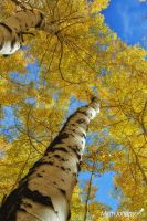Following the Tree Trunk to the Sky  by mjohanson