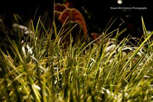 Grass by aseaofflames