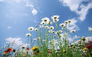 flowes and sky by san29