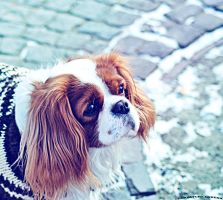 sweet dog by rockmylife