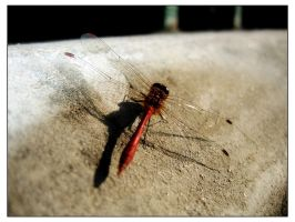 Dragonfly by Amnet