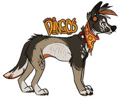 Dingos Design by Plumbeck