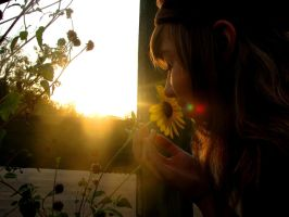 Sunflower by pearchel
