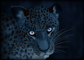 blue Eyes by Chrystal-Art