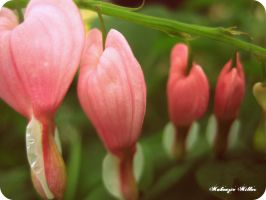 bleeding hearts by SweetSurrender13