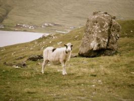 Faroe Islands: Sheep Islands by jac0ba
