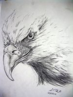 Eagle by pikels2