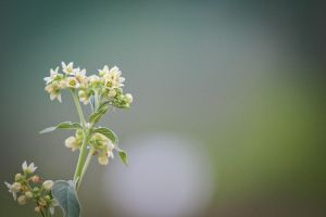 2012-05-28_001 by rootscratch
