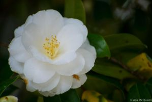White Flower by UltraSonicUSA