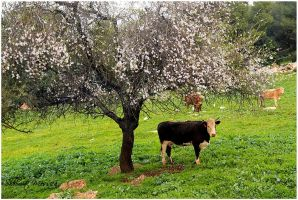 Under the almond tree by ShlomitMessica