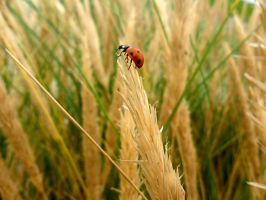 whats up there? by meow-melina