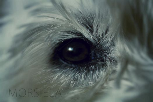 Dog eye by morsiela