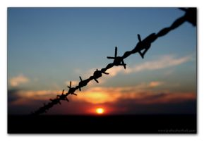 Barbed by jaybe