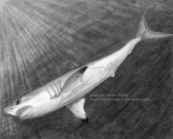 January - Porbeagle Shark by 8TwilightAngel8