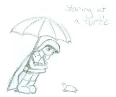 Staring at a turtle by stopthinkmove