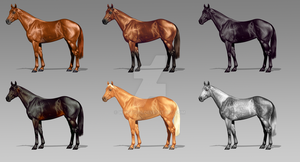 Thoroughbred Coat Colors by wideturn