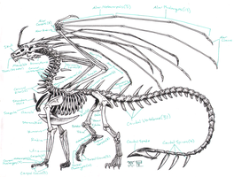 Zha Skeleton Anatomy by Zhantilniiraala