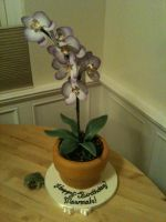 Orchid Pot Cake by Spudnuts