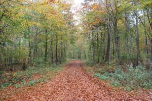 The wood is changing colour by frits10a