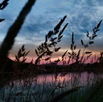 serenity through the reeds by TrishaMonsterr
