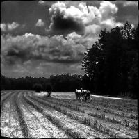Plough all day by irishcompass