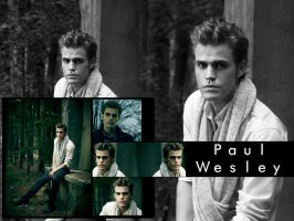 Paul Wesley Wallpaper 2 by me969