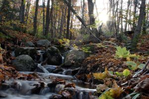 Autumn Forest Slow Waterfalls by Nebey