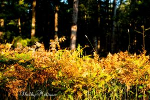 Where the Fern Grows by ShelbyMelissa