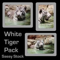 White Tiger - Stock Pack by Sassy-Stock