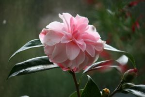 view to awesome camellia by ingeline-art