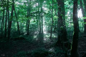 Dark Forest by Cindy-C-Photography