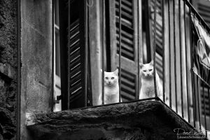 The two cats by LinsenSchuss