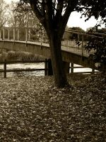 bridge n leaves by awjay