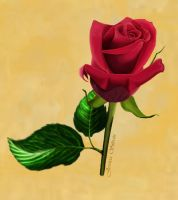 Red Rose for San Valentin by AnneaGoewin
