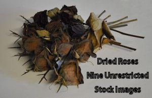 Dried Roses by FollowinTheBlackBird