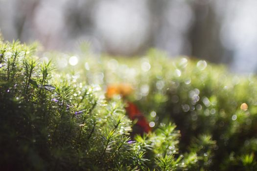 The Little Forest by Thyers