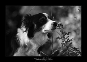 About A Dog, And Its Flower by LittleSpetacle