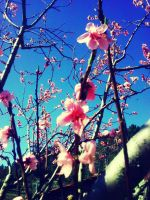 spring is coming ^^ by MartaGomes