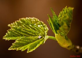 Budding young fella by dadian