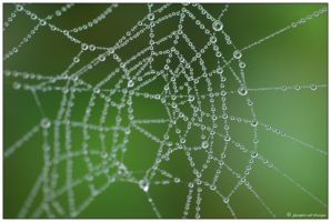 caught in the web by finepix-at