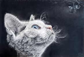 Cat and spider, charcoal/pastel A3 white paper by Helsartpage