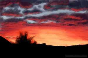 Backyard Aussie Sunset by Inamousetrap