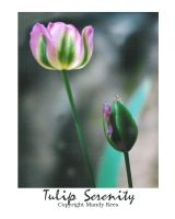 Tulip Serenity by sacredspace