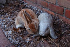 Lop and Bunny by LittleOddawa