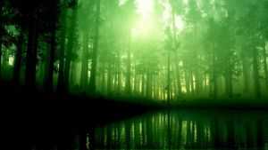 Forest, pines, fog, lake, green light by armas777