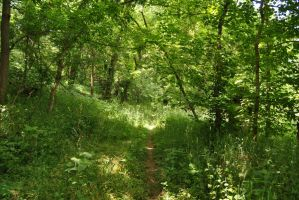 woods path stock by KEArnold