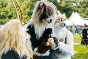 Elf Fantasy Fair 2013 54 by 42pixel