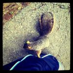 Perciville the Squirrel by Kitishane