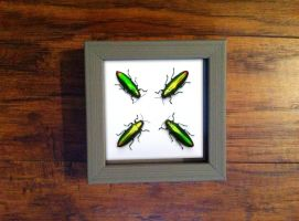 Jewel Beetle Study by TheButterflyBabe